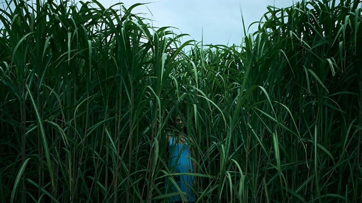 Becky DeMuth (Laysla De Oliveira) is out standing in a field in In the Tall Grass.
