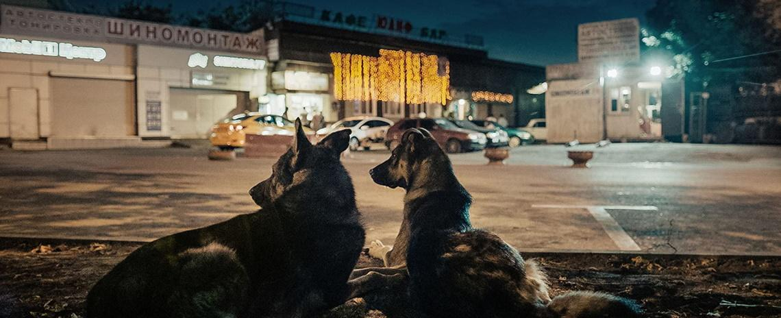Elsa Kremser and Levin Peter's 'Space Dogs' follows a group of Moscow street dogs and meditates on the legacy of the Soviet space program's canine cosmonauts.